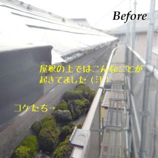 ヨネダリフォーム  施工事例 樋修繕工事 思わず書いてしまいました。 普段目にすることのない、屋根上。こんなに苔たちが育ってました! 貴重映像。 そら〜樋が詰まるわけです(汗) 屋根、外壁点検ただいま無料でさせて頂いております。 是非ともおうちの点検してみませんか? お問い合わせは ヨネダリフォーム福知山店 0120-840-617まで。  #樋修繕工事  #樋点検  #屋根修繕  #雪害  #樋に詰まってます  #樋割れてるし  #福知山リフォーム  #綾部市リフォーム  #丹波篠山市リフォーム  #丹波市リフォーム  #ヨネダリフォーム  #施工事例